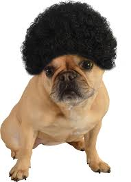 dogwig